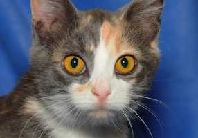 Velvet is available for adoption. All fees are waived Nov. 15-17 on cats 4 months old and older. Do you have room in your home?