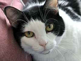 Acutie is available for adoption. LMAS and MAS are waiving adoption fees Nov. 15-17.