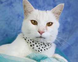 Cashemere is also available for adoption. To see more available cats visit the Kentucky humane societyand Metro Animal Services.