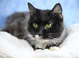 Cassidy is available for adoption. Adoption fees are waived Nov. 15-17.
