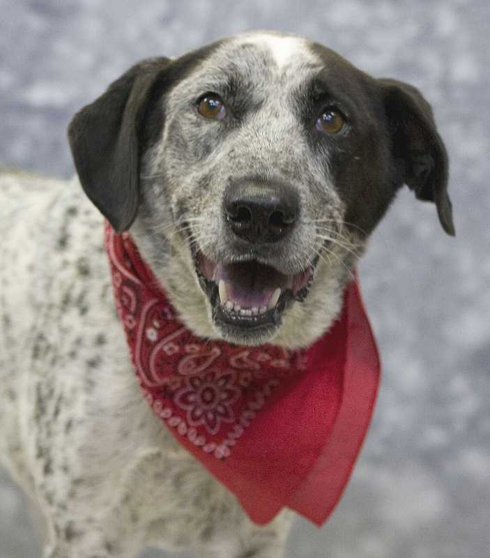 Sysco is need a of a home. Click here for more informationabout the Kentucky Humane Society.