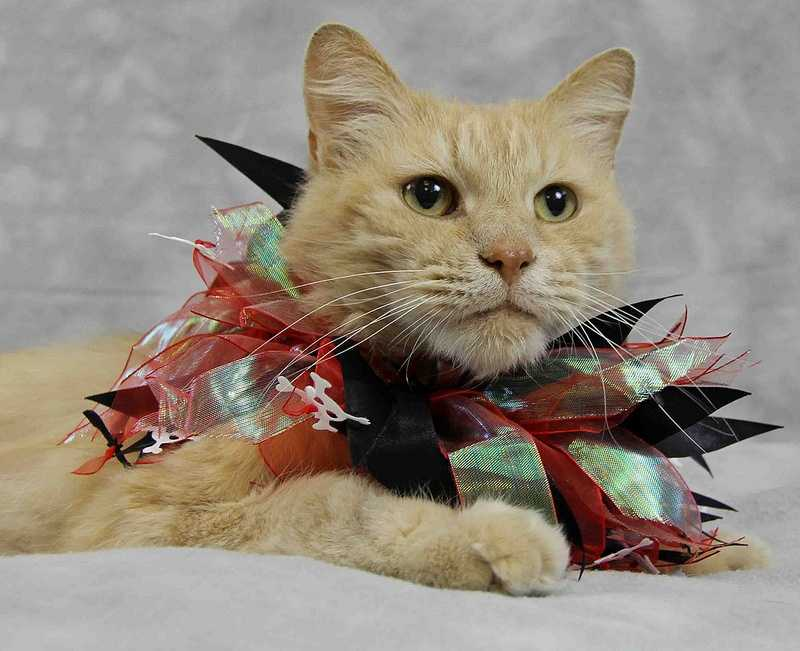 Baby Butter is looking for a loving home. Click here for more information
