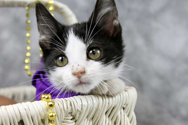 Bayou is a pretty kitty looking for a home. Click here for more information