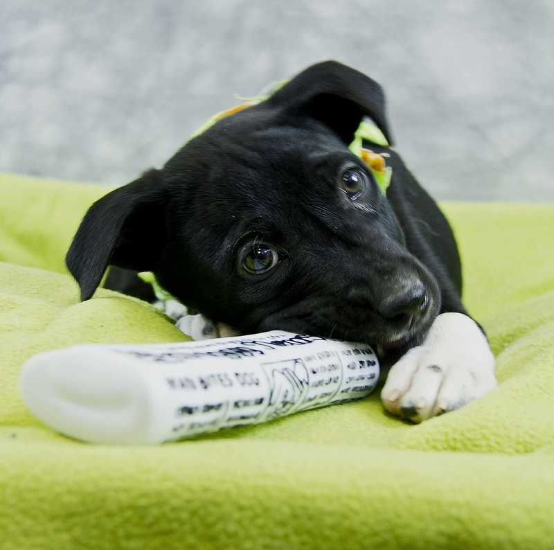 Carl is up for adoption through the Kentucky Humane Society. Click here for more information