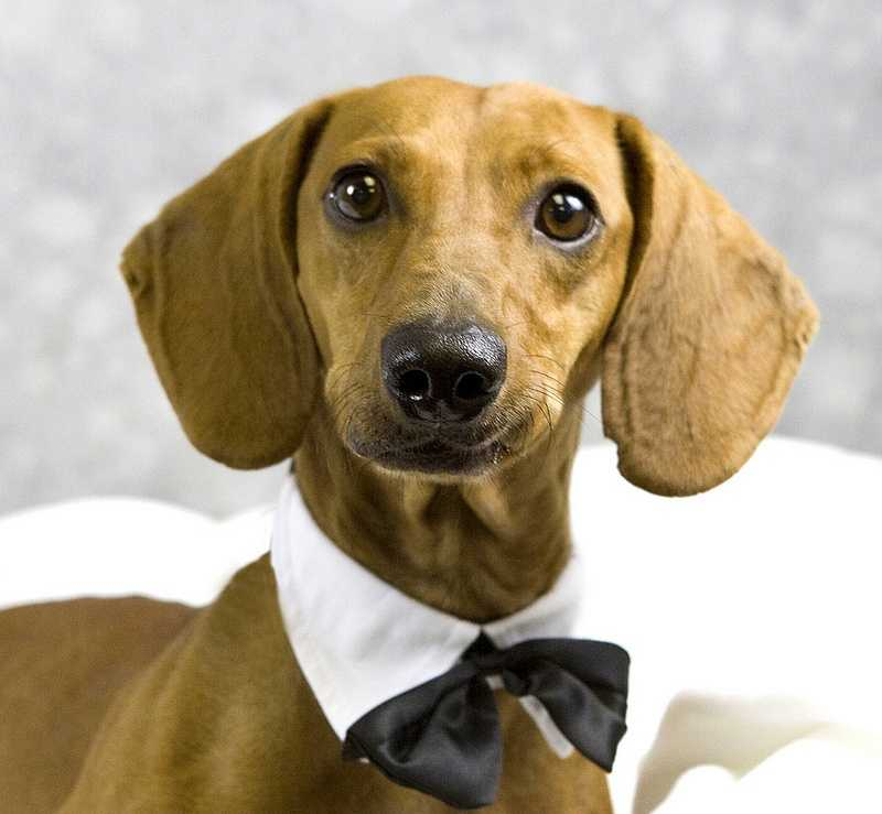 Eddie is looking for a new home. Click here for more information about Eddie and the Kentucky Humane Society