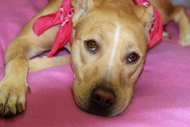 Jazee is available for adoption at the Kentucky Humane Society. Click here for more information