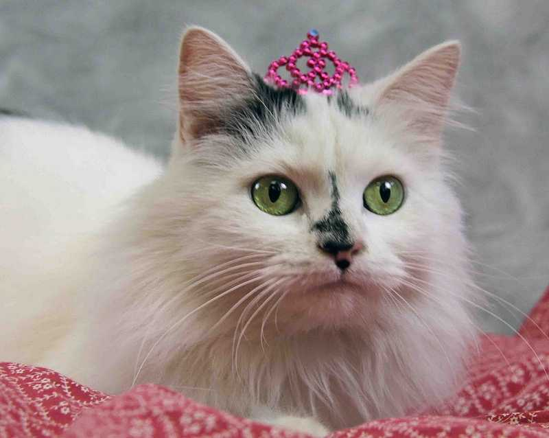 Posey is a pretty kitty looking for a new home. Click here for more