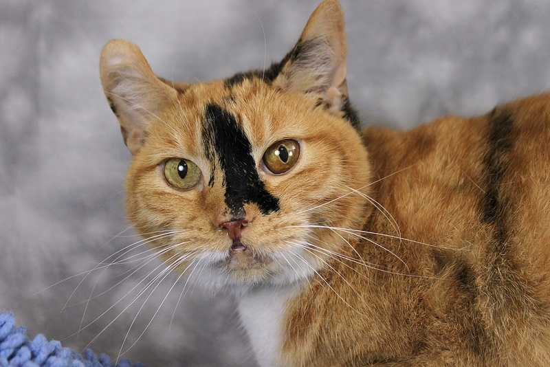 Precious is looking for a forever home. Click here for more from the Kentucky Humane Society.