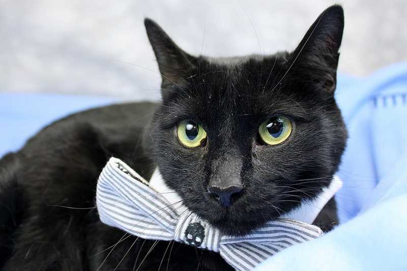Salt is a beautiful black kitty looking for a home. Click here if you're interested in adopting
