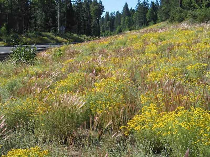 Native grass, prairie