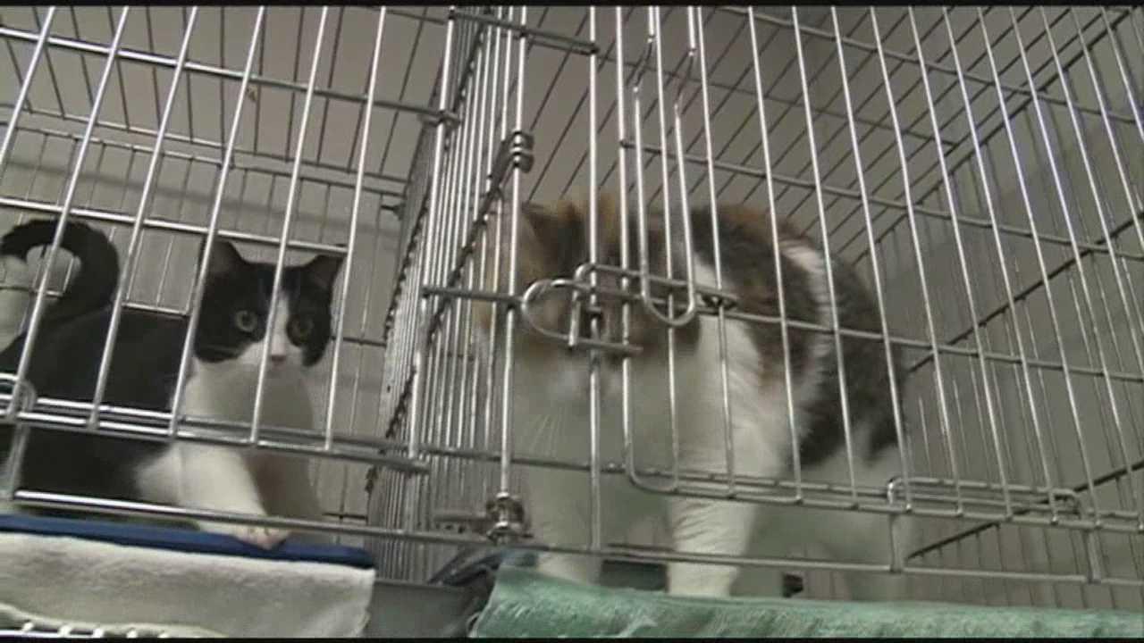 Animal shelter rebuilds after fire