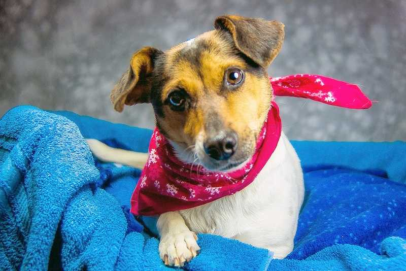 Patches is available for adoption through the Kentucky Humane Society.  Click here for more information