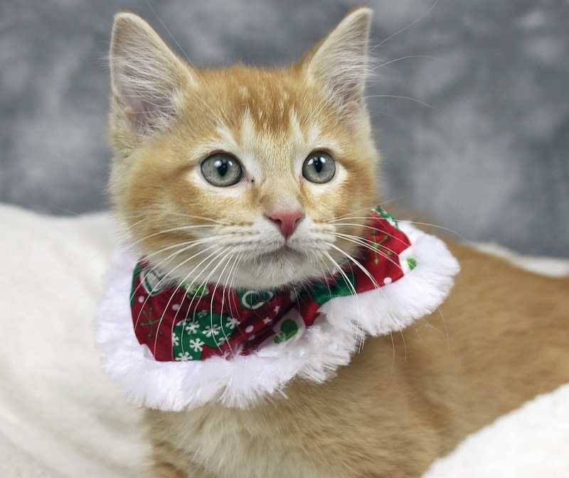 Prince is available for adoption through the Kentucky Humane Society.Click here for more information