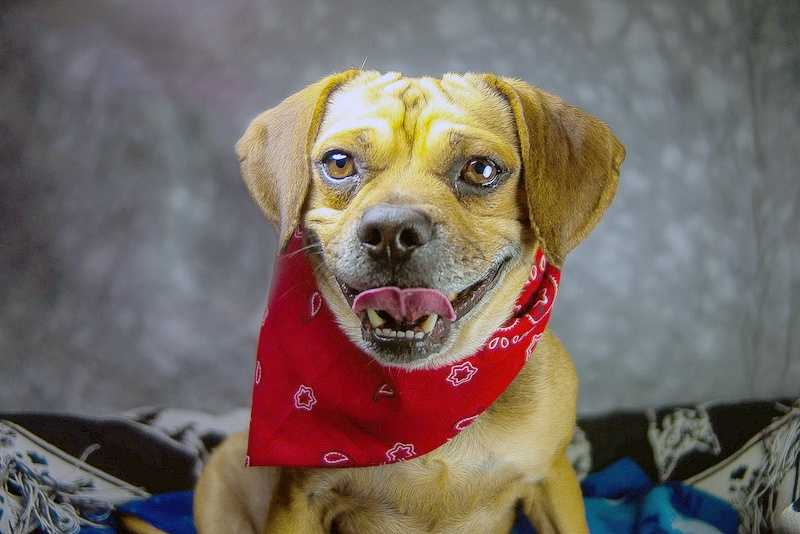 Baxton is available for adoption through the Kentucky Humane Society. Click here for more information