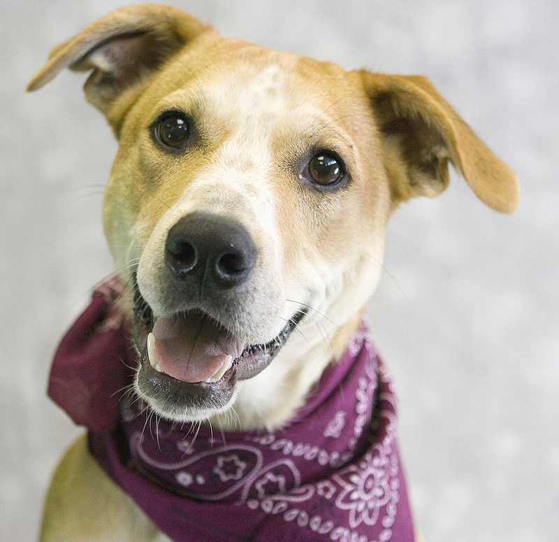 Buxton is available for adoption through the Kentucky Humane Society.Click here for more information