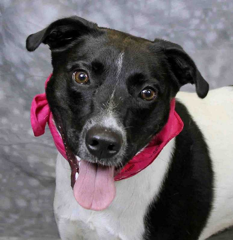 Jessie is available for adoption through the Kentucky Humane Society.Click here for more information