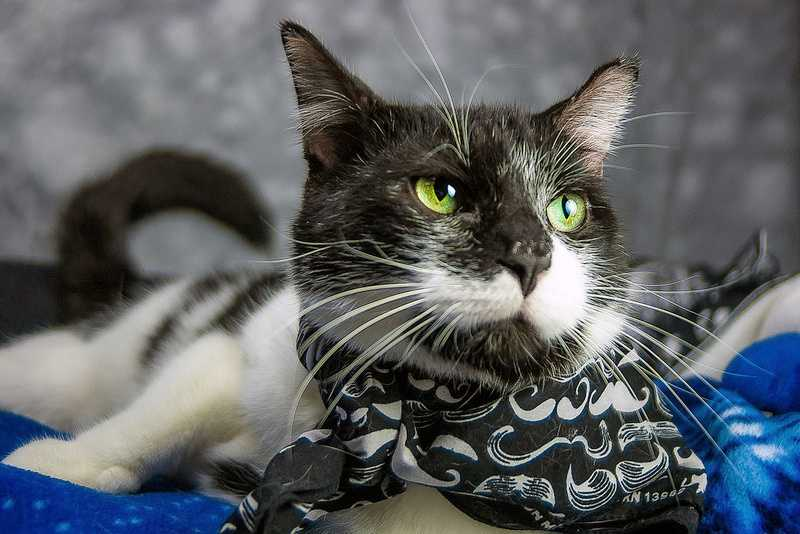 Louie is available for adoption through the Kentucky Humane Society. Click here for more information