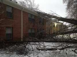 A tree fell on an apartment building at Guardian Court, off Preston Highway.