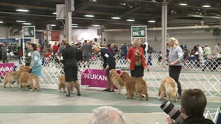 Kentuckiana Cluster of Dog Shows ends Sunday