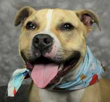 Landy is available for adoption through the Kentucky Humane Society. Click here for more info