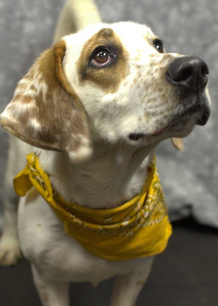Mollie is waiting for a forever home.Click here to see other adoptable pets!