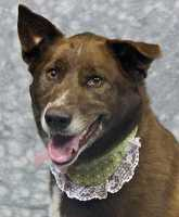 Nina needs a new home. Click here for more info