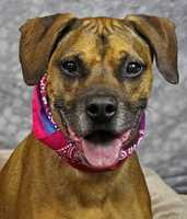 Bruno is a lovable pup looking for a home. Click here for more info