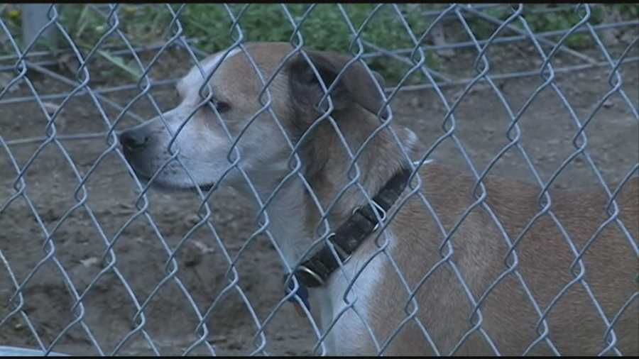 Numerous dogs were rescued from a home in Shelby County. Click here for more info on how to help.