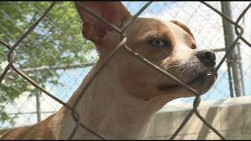 Numerous dogs were rescued from a house in Shelby County and are now in need of homes. Click here for more info