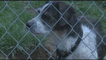 Numerous dogs were rescued from a house in Shelby County and are in need of new homes. Click here for more information