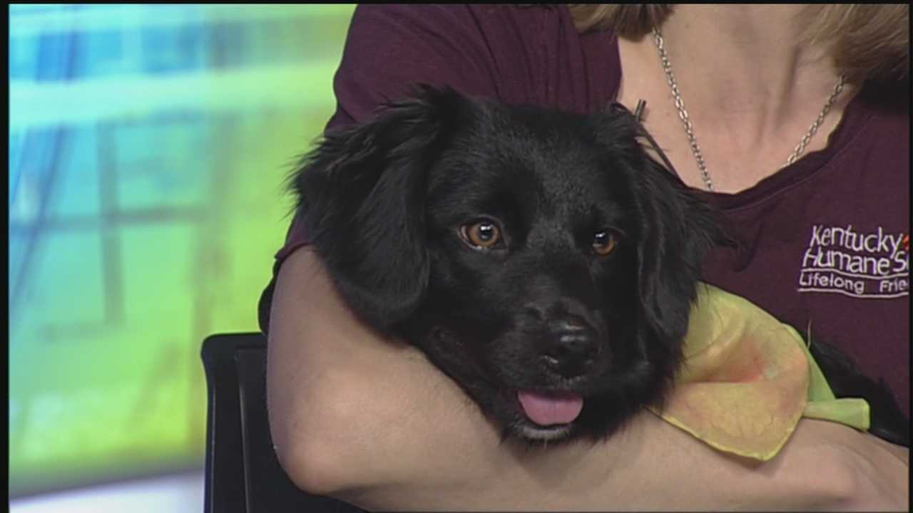 Next weekend, the Kentucky Humane Society has an event for you to enjoy the weather with your furry companion while raising money to help other animals still looking for a forever home.