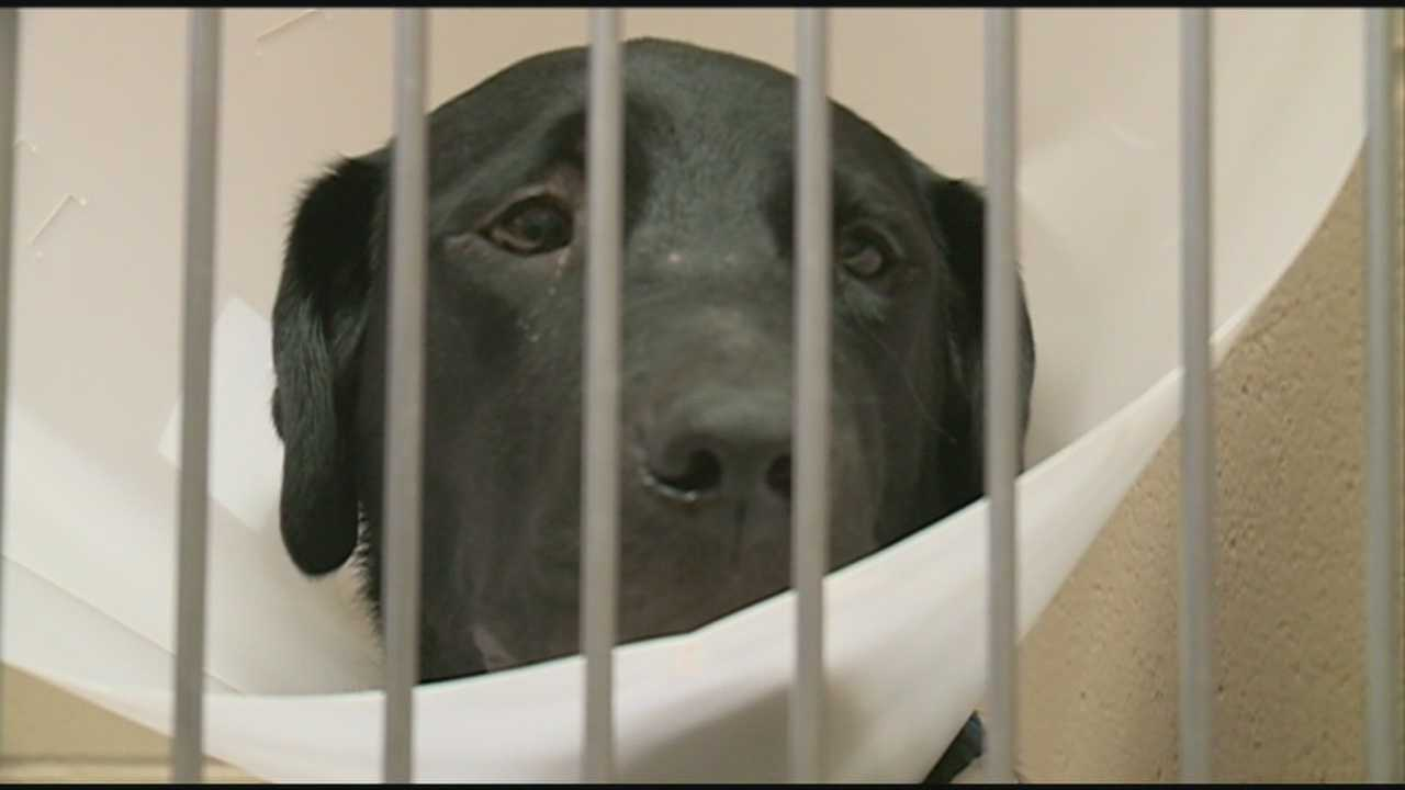 The staff at an area animal hospital is seeking donations of cat and dog blood.