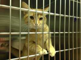 Click here for more information and adopting a new pet