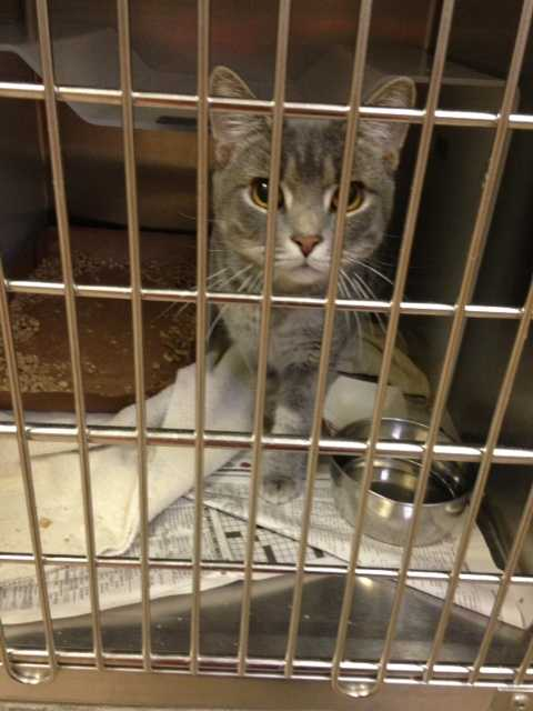 Click here for more information on adopting from the New Albany/Floyd County Animal Shelter