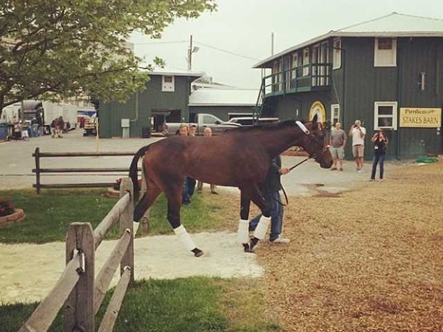 """POST 6: Ria Antonia (Odds 30-1)Owner - Loooch Racing StableTrainer - Tom AmossJockey - Calvin BorelBreeder - Lynn Schiff""""We're very happy with what we're trying to do. I think it's going to be a tactically ridden race. My filly has a lot of natural speed and we're going to tell (jockey) Calvin (Borel) not to take her too far off the pace. We've always wanted to run in this race. She's a very big filly and very sound. The fact that she's coming back in two weeks gives her an absolute edge,""""owner Ron Paolucci said."""