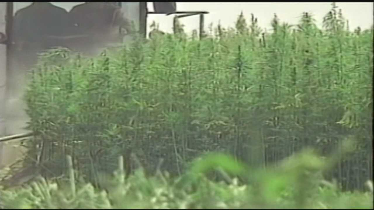 The Kentucky Department of Agriculture has acquired a license to possess hemp seeds.