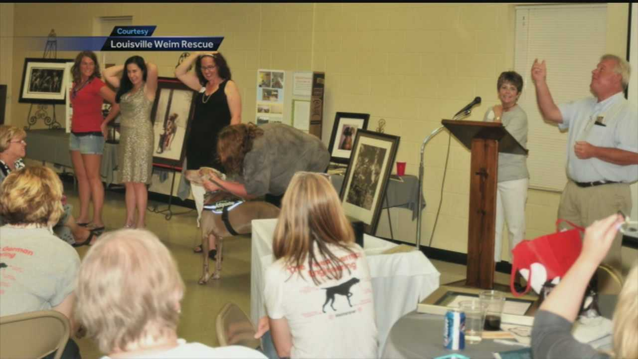A fundraiser is planned for June 14 to help find adoptive homes for rescued weimaraners.