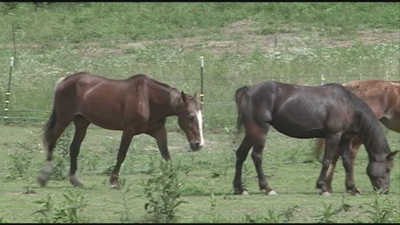 A dozen animals are seized from a property in southern Indiana.