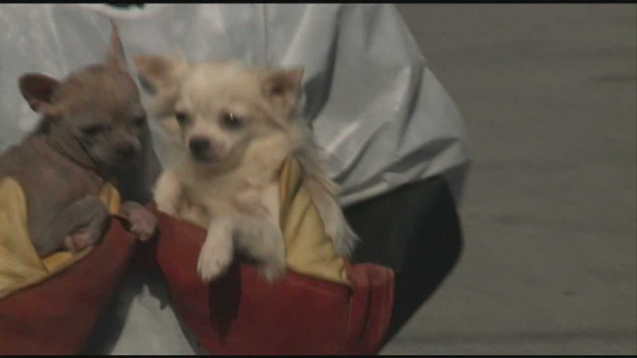 Dozens of dogs are taken from a western Kentucky home and are now receiving care in Floyd County.