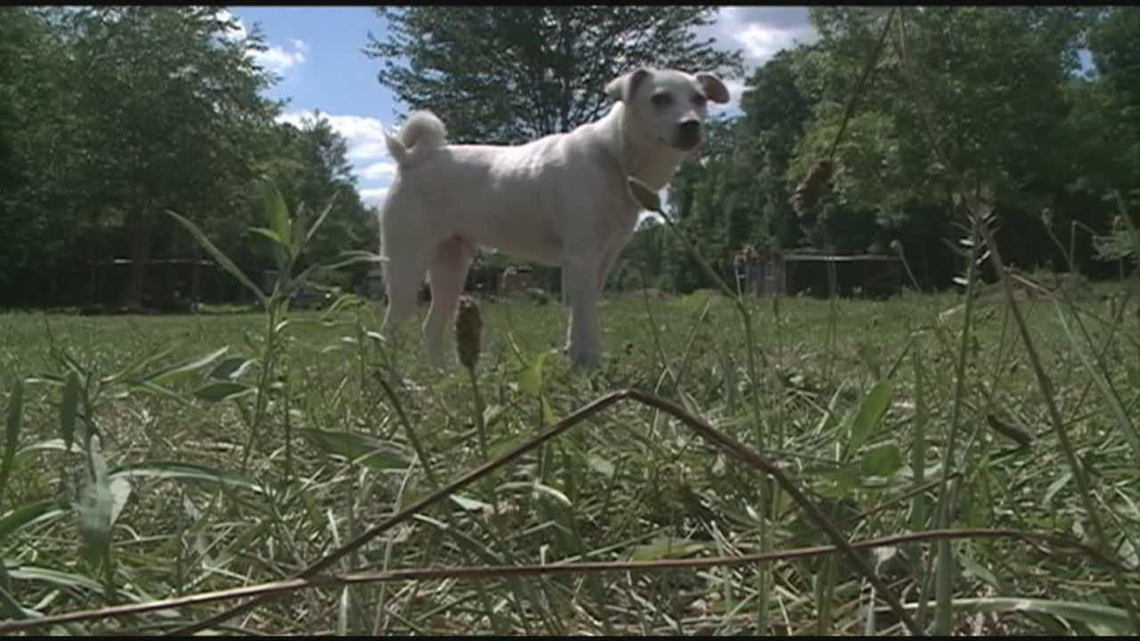 Dozens of animals seized from Scott County property