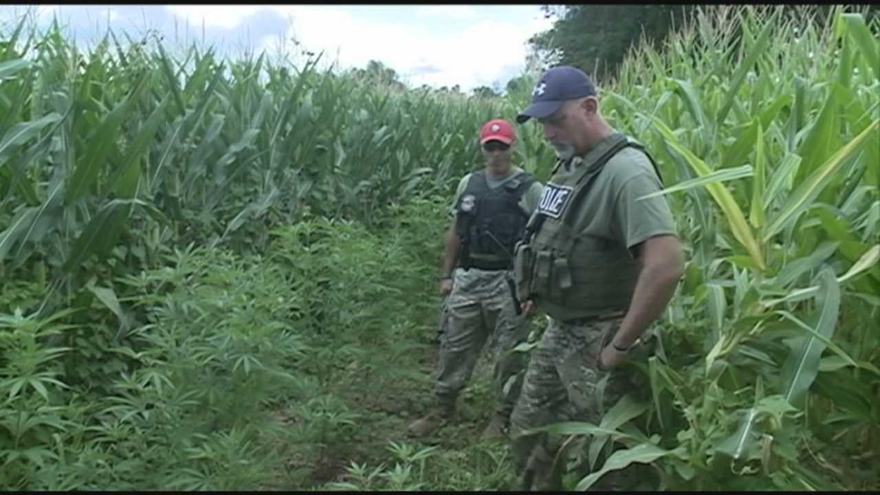 KSP make marijuana bust in Hardin County
