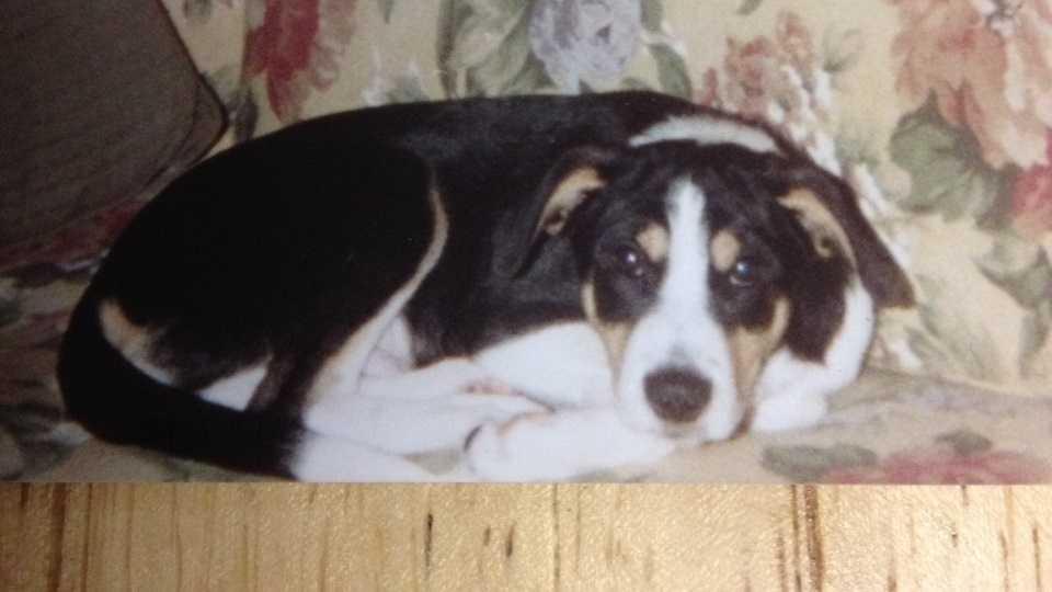 Nibbles E'Town killed dog.JPG