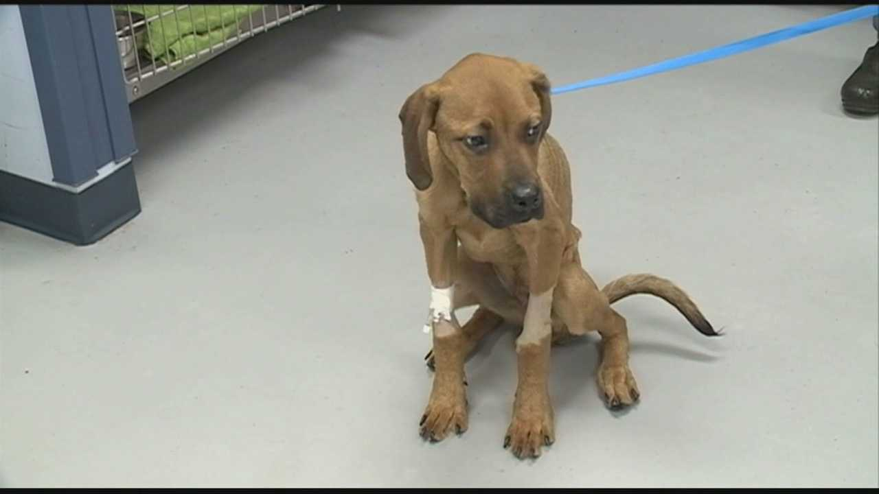 A woman is accused of leaving her dog without food or water for weeks and then dumping him on the street.