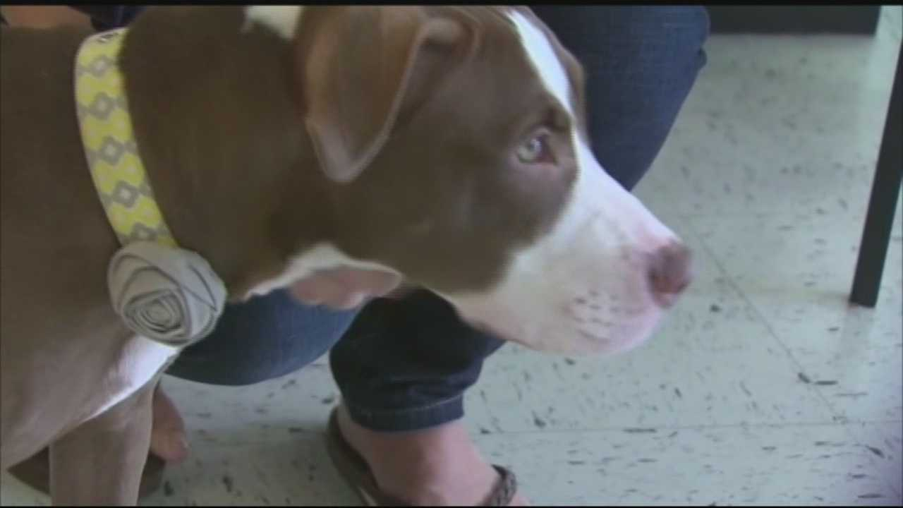 Students at henry clay high school are raising money for the Lexington Humane Society after someone used bleach or another chemical to brand a profane word into her skin.