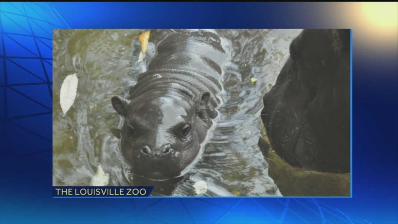The Louisville Zoo's baby hippo finally has a name!