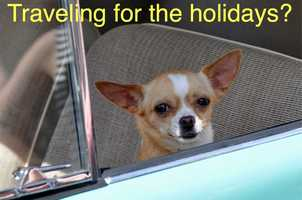 Many people travel during the holiday season, which can mean several different scenarios for pets...