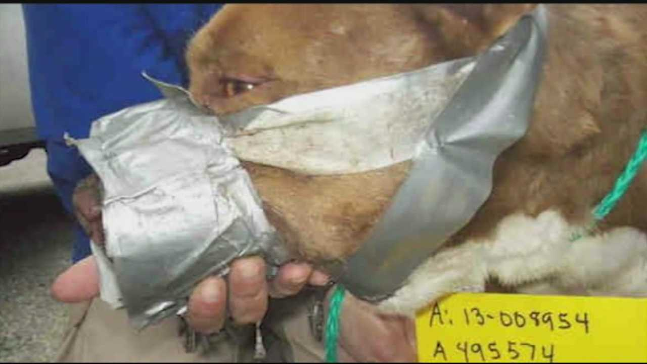 A bill that would strengthen Kentucky's dog fighting laws is now before the State House in Frankfort.