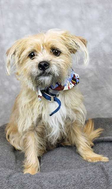 Teddy is available for adoption through the Kentucky Humane Society.