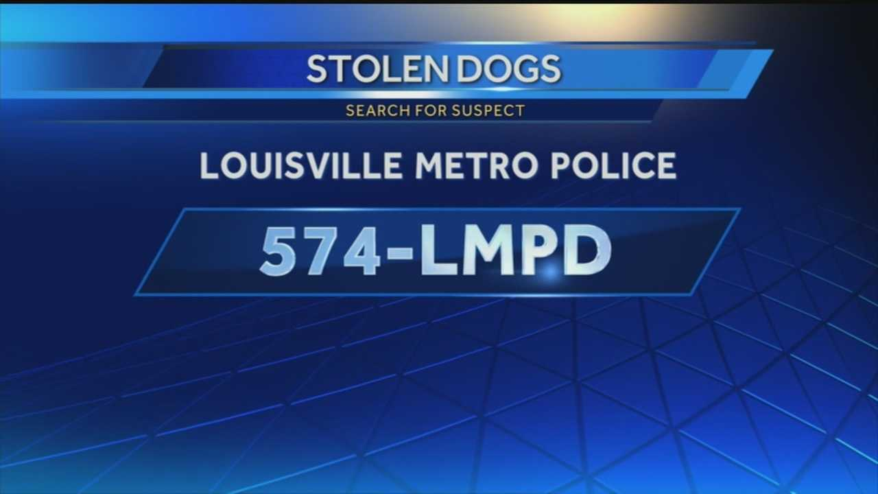 Stolen dogs missing, 1 suspect arrested