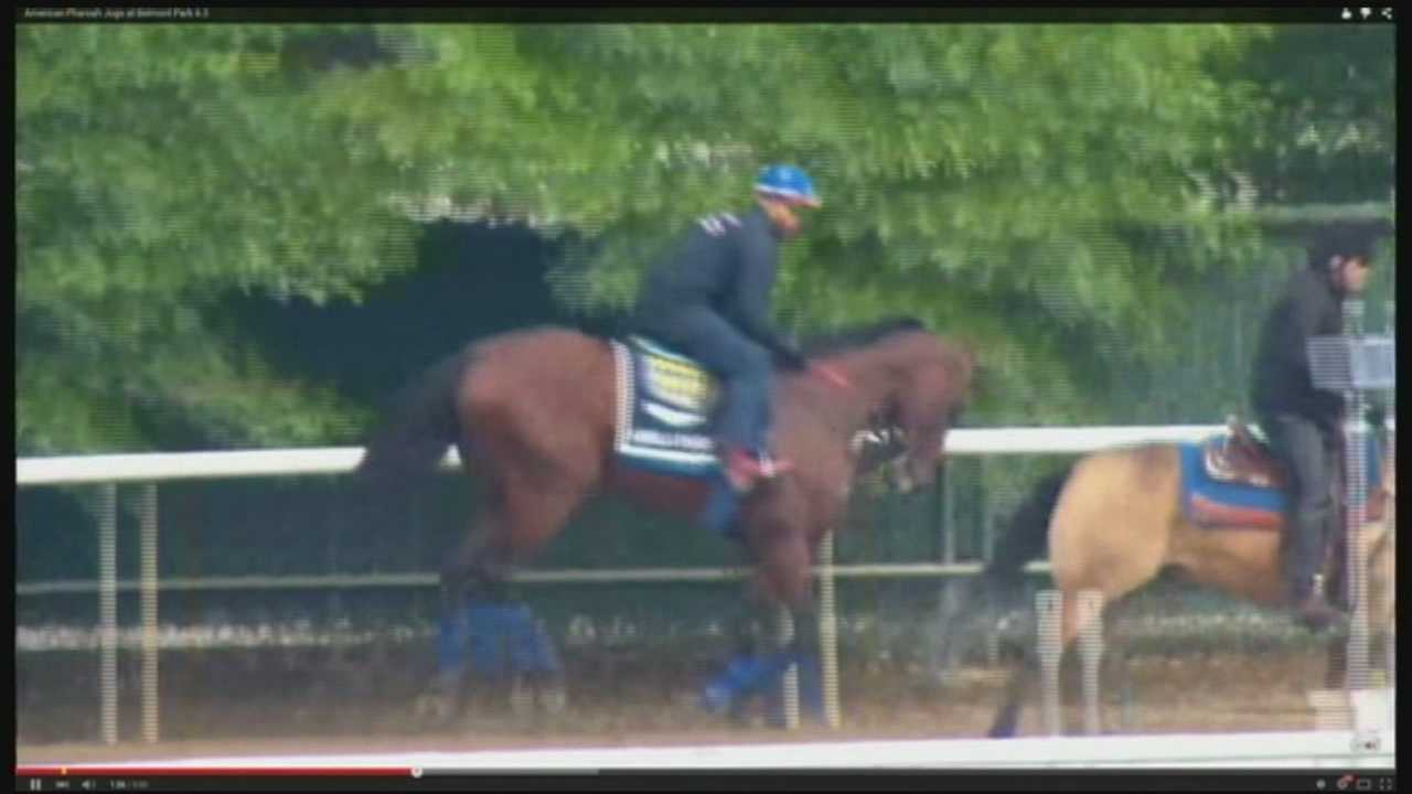 The field is set for Saturday's Belmont Stakes as American Pharoah tries to make history.